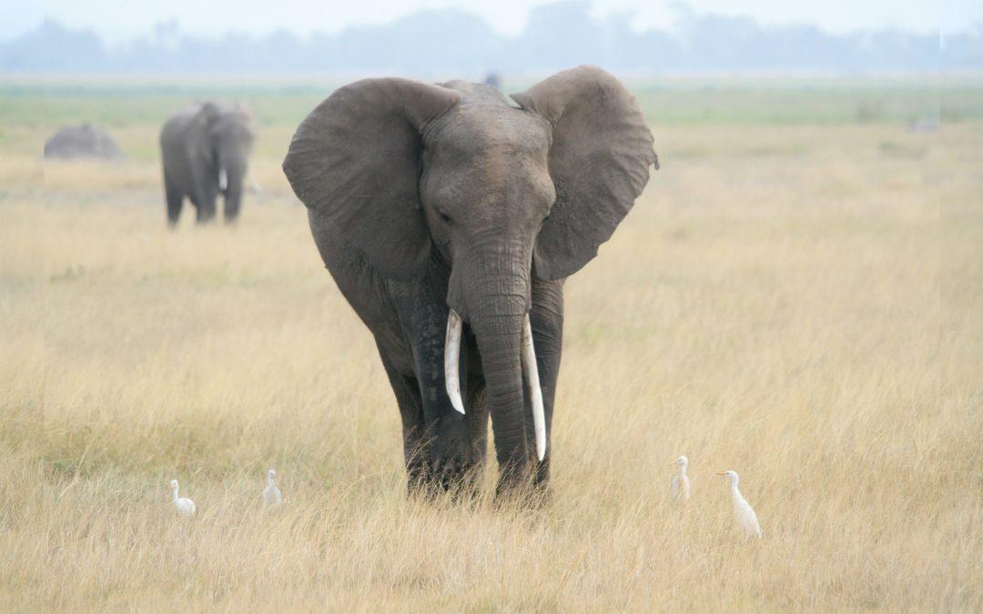 Histoire inspirante: les aveugles et l'éléphant
