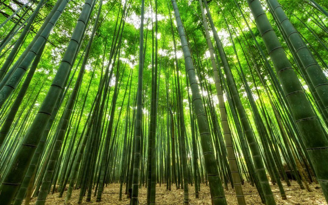 Histoire inspirante: la fougère et le bambou