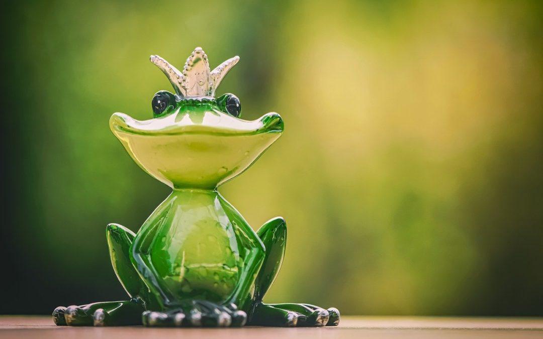 Histoire inspirante de la course de grenouilles